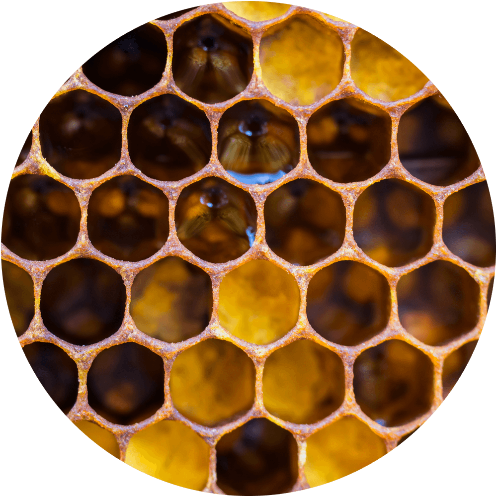 Close up of a honeycomb