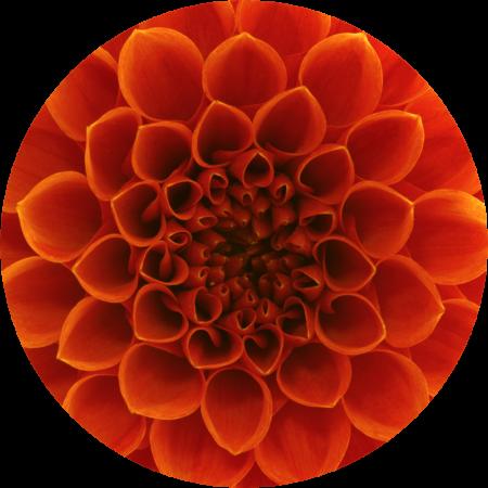 Orange Flower petal detail